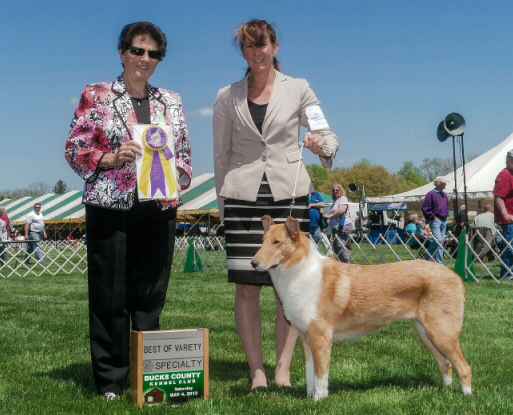 Keystone Collie Club : Best of Variety