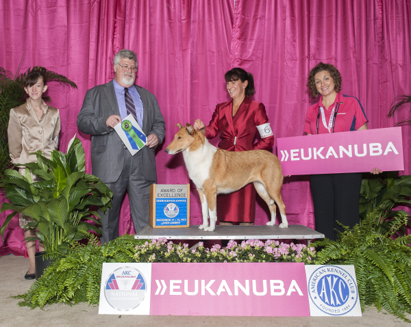 Gigi : Award of Excellence : Eukanuba 2013